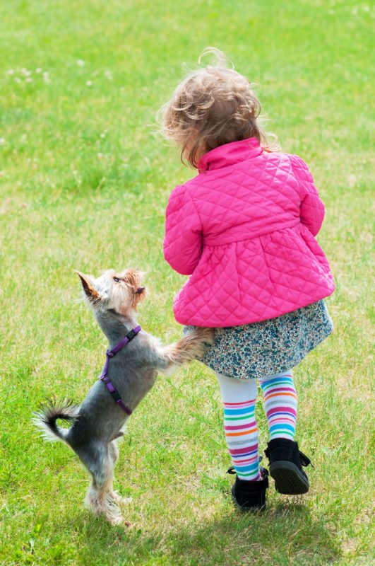 Owning a dog in bright pets
